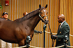 September 15, 2015: Hip 414 Malibu Moon - Lotta Kim colt consigned by Gainesway.   Candice Chavez/ESW/CSM