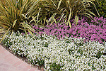 NEMESIA FRUTICANS 'AROMATICA WHITE IMPROVED' AND 'AROMATICA ROSE PINK', AND PHORMIUM TENAX, VARIEGATED NEW ZEALAND FLAX