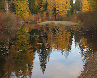 Autumn colors reflected in the South Yuba River at Cisco Grove, west of Truckee.
