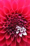Flowers - general