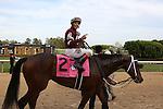 April 10, 2015: Jockey John Velazquez aboard #2 Untapable celebrating after winning the Apple Blossom Handicap at Oaklawn Park in Hot Springs, AR. Justin Manning/ESW/CSM