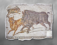 First half of the 3rd century AD Roman mosaic depiction  a wild boar and hare hunt. From Hadrumetum (Sousse), Tunisia.  The Bardo Museum, Tunis, Tunisia. Grey background