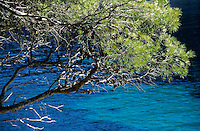 Pine tree against Mediterranean Sea.