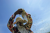 PHILIPPINES, Negros, woman with straw hat winnowing rice to separate grain from chaff / Philippinen, Negros, Frau mit Strohhut trennt die Spreu vom Reiskorn mit Hilfe des Windes