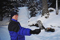 Spotted Nutcracker (Nucifraga caryocatactes), Tourist hand feeding Nutcracker by minus 15 Celsius, Davos, Switzerland, December 2007