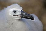 Antarctica, Falklands, and South Georgia wildlife