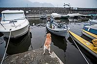 pesca professionale sul lago di Como. Alessandro Sala e il suo cane Ice