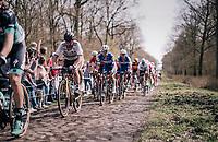 World Champion Peter Sagan (SVK/Bora-Hansgrohe) on the infamous Arenberg Forest / Bois de Wallers cobbles<br /> <br /> 116th Paris-Roubaix (1.UWT)<br /> 1 Day Race. Compiègne - Roubaix (257km)