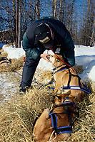 Vet Vern Starks Checks John Barron's Dogs at Galena