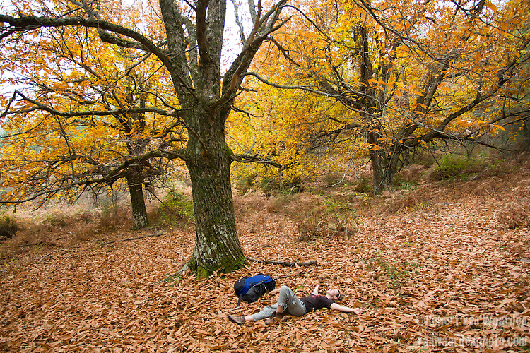 A woman lies in the chestnut leaves while taking a break from hiking in Corsica.