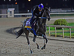 November 1, 2018 : Midnight Bisou, trained by Steve Asmussen, trains for the Breeders' Cup Distaff at Churchill Downs on November 1, 2018 in Louisville, KY. Jessica Morgan/ESW/CSM