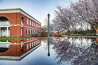Darden School of Business in Spring. Photo/Andrew Shurtleff Photography, LLC