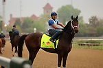 LOUISVILLE, KY - APRIL 23: Dazzling Gem (Misremembered x Dazzling, by Vindication) stands on the track at Churchill Downs in preparation for the Kentucky Derby. Owner Steve Landers Racing LLC, trainer Brad H. Cox. (Photo by Mary M. Meek/Eclipse Sportswire/Getty Images)