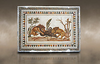 Picture of a Roman mosaics design depicting Lions eating a boar, from the ancient Roman city of Thysdrus. 2nd century AD, House of the Dionysus Proccession. El Djem Archaeological Museum, El Djem, Tunisia. Against an art background