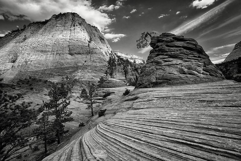 Bonai tree.  Zion National Par, Utah