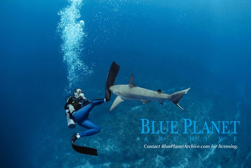 Shark expert Neal Watson fighting Caribbean reef shark, Carcharhinus perezii, Bahamas - Caribbean.