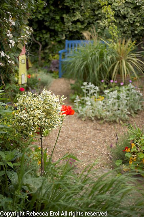 Small dry gravel garden in London, UK
