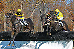 07 November 2009: Early Note, Liverpool Gloves and Country Cousin (1st) with Carl Rafter in the Constitution Hurdle at Montpelier Hunt Races in Orange, Va. Country Cousin is owned by Oakwood Stable and trained by Julie Gomena.