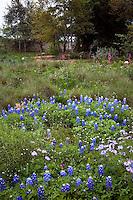Lady Bird Johnson Wildflower Center, Texas wildflower meadow garden with Carex (sedge), Muhlenbergia grass, Lupine, and paintbrush flowers
