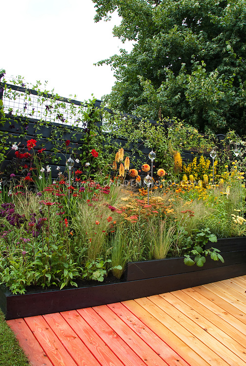 Hot garden colors in rainbow color theme garden of red and orange and yellows, Achillea, ornamental grasses, Kniphofia, dahlia, Astrantia, Echinacea, Gaura, Lysimachia, garden globe ornaments, fence, climbing vines Clematis, pathway, walkway deck wooden