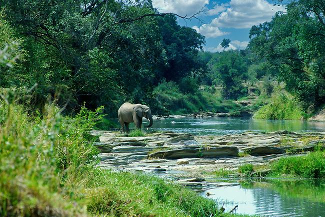 Elephant at Mara River