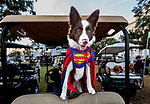 Super Piper, the border collie that lives at Shell Point.