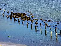 Blick auf Nordstrand, Insel Helgoland, Schleswig-Holstein, Deutschland, Europa<br /> Northern beach, Helgoland island, district Pinneberg, Schleswig-Holstein, Germany, Europe