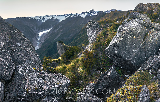 Dawn views of Southern Alps with Mount Tasman and Aoraki, Mount Cook from Mt. Fox. Fox Glacier on left, Westland Tai Poutini National Park, West Coast, UNESCO World Heritage Area, New Zealand, NZ
