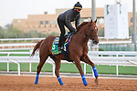 Track Work: February 19 2021: CHARLATAN (USA) Track work from King Abddulaziz Racetrack, Riyadh, Saudi Arabia. Shamela Hanley/Eclipse Sportswire/CSM FEBRUARY 19 2021: The Saudi Cup Preparations.