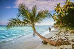Palm tree, Caribbean Ocean, Bocas del Toro, Panama