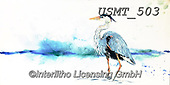 Malenda, REALISTIC ANIMALS, REALISTISCHE TIERE, ANIMALES REALISTICOS, paintings+++++,USMT503,#a#, EVERYDAY