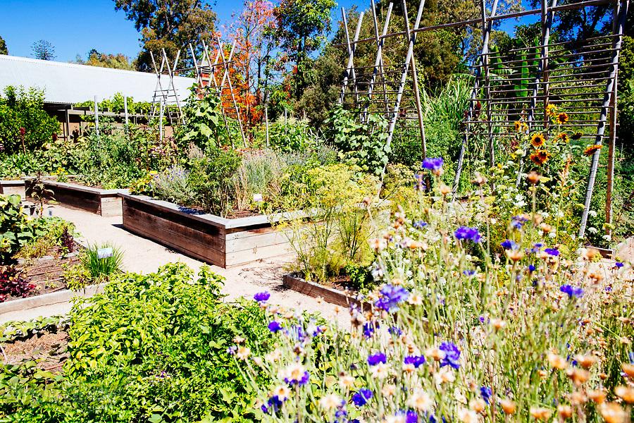 Image Ref: M222<br /> Location: The Royal Botanical Garden<br /> Date: 03.02.17