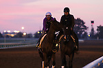 October 23, 2015:  Beholder, trained by Richard Mandella, and owned by B. Wayne Hughes, cross entered in the Breeder's Cup Classic Grade 1 $5,000,000, and the Breeder's Cup Distaff $2,000,000.  Candice Chavez/ESW/CSM