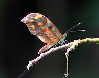 Haitian Mimic