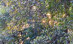 Bandhavgarh National Park, India, <br /> <br /> http://www.bandhavgarh-national-park.com/flora-in-bandhavgarh.html