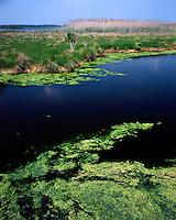 Pools of algae in the Chincoteague National Wildlife Refuge; Assateague National Seashore, VA