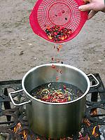 Früchtetee, Tee, Punsch, Früchtepunsch aus Holunderbeeren, Fliederbeeren, Hagebutten, Himbeeren, Schwarzer Holunder, Apfelschalen, Eberesche, Vogelbeeren, Schlehen wird in einem Topf über einem offenen Lagerfeuer gekocht, Outdoor