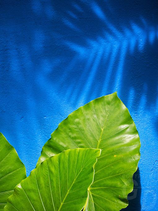 Shadows on a blue wall, Langkawi, Malaysia