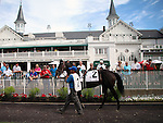 May 24, 2014 War Dancer in the paddock before his victory in the G3 Louisville Handicap (jockey Alan Garcia.) The winner was owned by Diamond M Stable and trained by Ken McPeek.  The race was run in 2:28.23, a new stakes record.