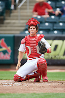 Springfield Cardinals catcher Jesse Jenner (43) during a game against the San Antonio Missions on June 4, 2017 at Hammons Field in Springfield, Missouri.  San Antonio defeated Springfield 6-1.  (Mike Janes/Four Seam Images)