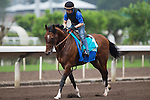 SHA TIN,HONG KONG-APRIL 30: Maurice ,trained by Noriyuki Hori ,exercises in preparation for the Champions Mile at Sha Tin Racecourse on April 30,2016 in Sha Tin,New Territories,Hong Kong (Photo by Kaz Ishida/Eclipse Sportswire/Getty Images)