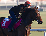Lines of Battle (USA) works out on March 29th, 2013 at Meydan Racecourse (( Special transmission of horses in the Top 25 for points for the 2013 KentuckyDerby ))