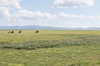 Mongolia, Gobi Gurvan Saikhan National Park, Gobi Desert, Three Camel Lodge. Men on horses. .