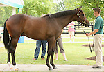 13 July 2010.  Hip #127 Hard Spun - Swigert colt sold for $170,000.   Hard Spun's first foals are yearlings of 2010.