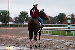 October 28, 2015: Big Macher, trained by Richard Baltas, and owned by Tachycardia Stables, and Tom Mansor, is entered in the Breeder's Cup TwinSpires Sprint.  Candice Chavez/ESW/CSM