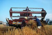 Raccolta di grano. Grain harvest....
