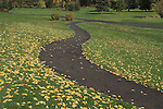 Autumn leaves and pathway at Vail Golf Course, Vail Colorado.