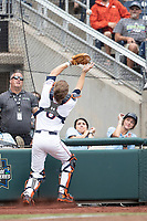 Auburn Tigers catcher Matt Scheffler (6) catches a foul ball during Game 7 of the NCAA College World Series against the Louisville Cardinals on June 18, 2019 at TD Ameritrade Park in Omaha, Nebraska. Louisville defeated Auburn 5-3. (Andrew Woolley/Four Seam Images)
