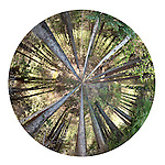 Circular panorama of trees in breal forest