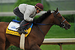 25 April 2010: Noble's Promise breezed four furlongs in :48.80 in preparation for the Kentucky Derby at Churchill Downs in Louisville, Kentucky.